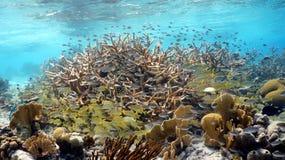 一块五颜六色的热带礁石 免版税库存照片
