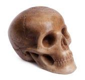 一块人力头骨的石膏模型 免版税库存图片
