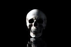 一块人的头骨的现实模型有牙的 免版税库存图片