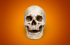 一块人的头骨 库存照片
