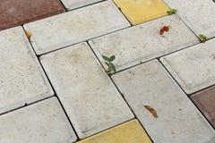 一块单调色的砖石头的看法在地面上的str的 免版税库存图片