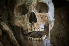 一块古老人的骨骼和人的头骨的考古学挖掘 免版税库存图片