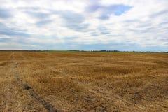 一块大黄色麦田在收获以后和阴暗天空在背景中 库存照片