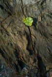 一块小的石头的特写镜头 免版税图库摄影