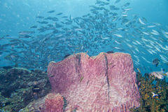 一块巨型海绵在蓝色背景中 库存图片