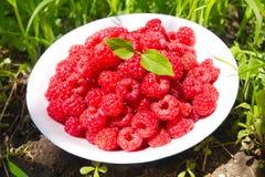 一块板材用莓成熟莓果  库存图片