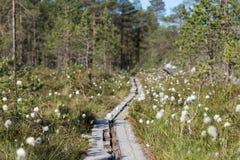 一块森林和沼泽地的看法在芬兰 库存照片