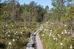 一块森林和沼泽地的看法在芬兰 图库摄影