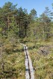 一块森林和沼泽地的看法在芬兰 免版税库存照片