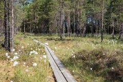 一块森林和沼泽地的看法在芬兰 免版税库存图片