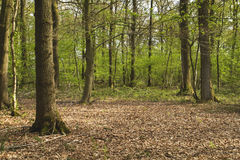 一块沼地在森林里 库存照片
