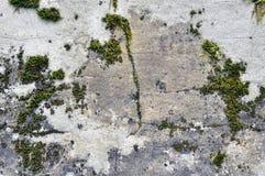 一块石头有青苔纹理灰色背景 库存照片
