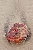 一块石头的特写镜头在海滩的兰萨罗特岛 免版税库存图片