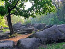 一块美丽的沼地在有a的一个森林里喜欢与放在一棵树附近的稀奇的形状大石头的一部童话影片  库存照片