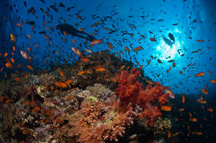 一块美丽的礁石活与鱼 库存图片