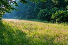 一块象草的沼地在树之间的森林里与落对此的朝阳的第一光芒 免版税库存照片