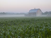 一块麦地的老木谷仓在黎明 免版税库存图片