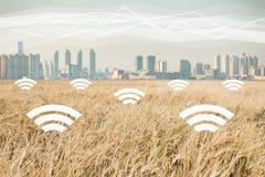 一块麦田在现代城市的背景的 在农业的数字技术 库存图片