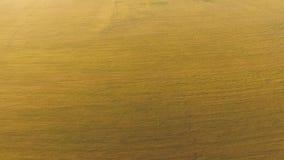一块麦田绿色和黄色 影视素材