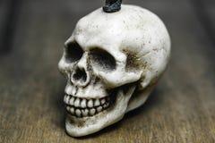 一块头骨有木背景 免版税图库摄影