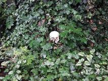 一块头骨的细节在公墓 免版税库存图片