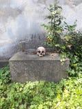 一块头骨的细节在公墓 库存图片