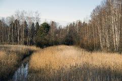 一处平安的草甸风景 库存照片