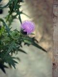 一大杯子牛蒡属lappa的花 免版税图库摄影