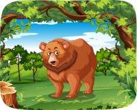 一头北美灰熊在密林 皇族释放例证