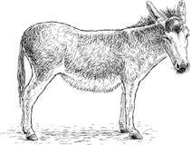 一头哀伤的常设驴的手图画 向量例证