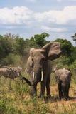 一头巨大的大象和一个婴孩大象特写镜头在大草原 肯尼亚mara马塞语 免版税库存图片