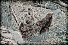 一头棕熊跟他开玩笑 免版税图库摄影