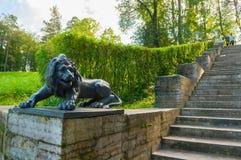 一头狮子的大石楼梯和雕塑在一个垫座的在Pavlovsk停放,圣彼德堡,俄罗斯 图库摄影