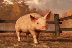 一头猪在秋天 皇族释放例证