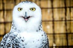 一头猫头鹰的画象与调查照相机的开放额嘴的 库存照片