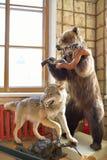 一头被充塞的熊和一头狼在大Gatchina宫殿 免版税库存图片