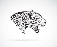 一头豹子的传染媒介在白色背景的 通配的动物 免版税库存图片