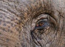 一头非洲大象的眼睛 免版税图库摄影