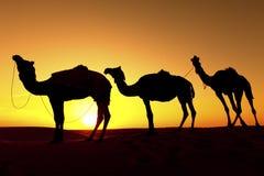 一头骆驼的剪影在沙漠。 免版税库存照片