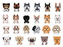 一套不同的品种,不同的颜色,耳朵的类型小狗狗  向量例证