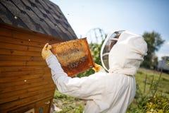 一套专业蜂农服装的一位年轻女性蜂农,检查与拿着它在她的手上的蜂窝的一个木制框架 col 免版税库存照片