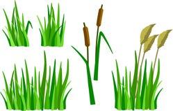 一套动画片草、芦苇和藤茎 免版税库存照片