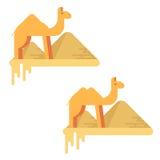 一套在吉萨棉金字塔背景的两头骆驼  免版税库存照片