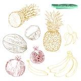 一套热带水果:菠萝,石榴,香蕉和 图库摄影