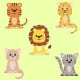 一套猫,老虎,狮子,豹子的象 皇族释放例证