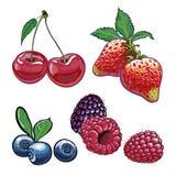 一套莓果 免版税库存照片