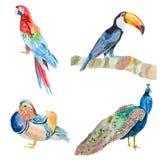 一套水彩鸟 免版税库存照片