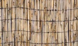 一定的竹子墙壁传染媒介纹理  皇族释放例证