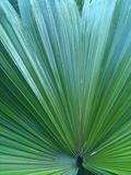一家野生植物的叶子 库存图片