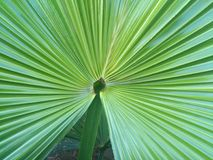一家野生植物的叶子 免版税图库摄影